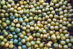 Yellow Green Apples