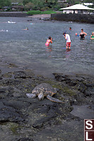 Turtle With People Behind