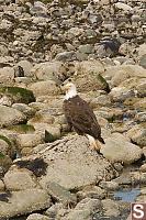 Eagle On Rock