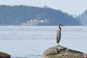 Heron With Lighthouse