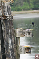 Purple Martin Nest Boxes