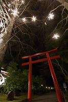 Torii With Lit Trees