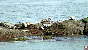Seals on Belle Islands