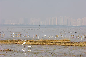 Birds With Shenzen Behind