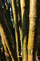 Bamboo Inscribed