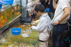 Picking Fish Out Of Tanks