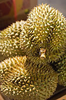 Stack Of Durian