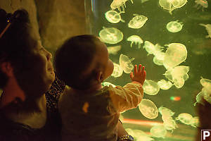 Claira And The Jellyfish