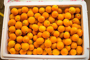 Cooler Of Kumquat