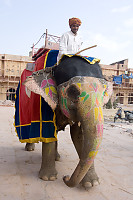 Riding Elephant In Fort