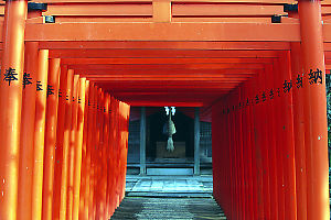 Long Row Of Torii
