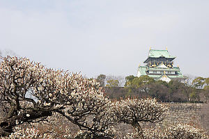 White Blossoms And Castle With Wall