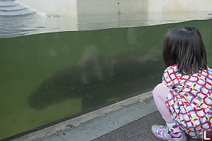 Nara Watching Pygmy Hippopotamus Swim By