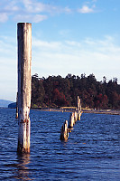 Line Of Exposed Pilings