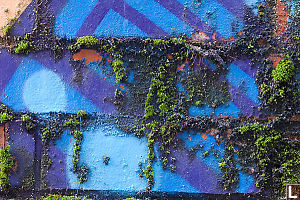 Blue Brick And Moss
