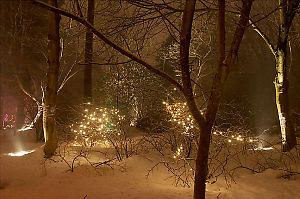 Bright Lights Found Snow