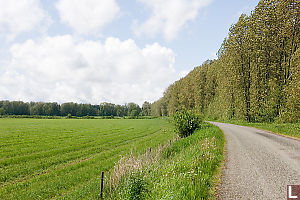 Tall Trees Along Road Side