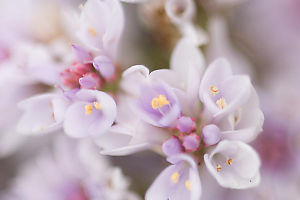Light Violet Flowers