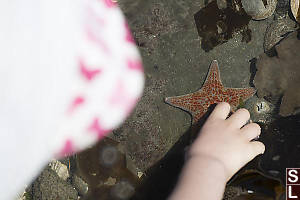 Leather Star In Water