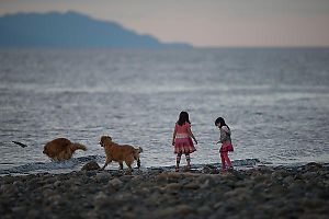 Dogs And Kids At Sunset