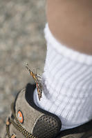 Butterfly On My Sock