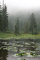 Yew Lake With Fog