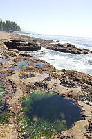 Tide Pool On Shore