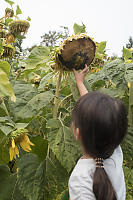 Claira Touching Sunflower