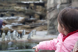 Nara Sees Penguins Feeding