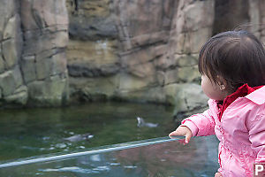 Nara Sees Penguins Swimming