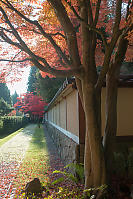 Maple Trees Outside Gate