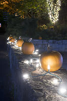 Lit Pumpkins On Wall