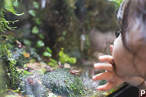 Claira Looking At Little Frogs