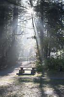 Rays Over Picnic Table