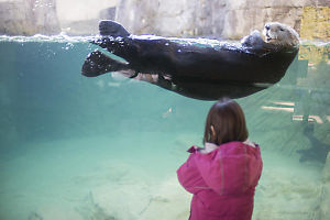 Claira Oblivious To The Sea Otter