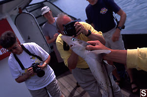 Dog Fish Being Photographed