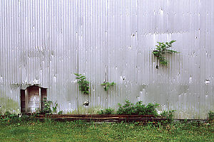 Trees Growing out of the Walls - Warehouse in Namu