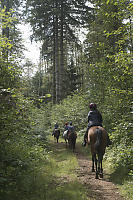 Trail Riding In Forest