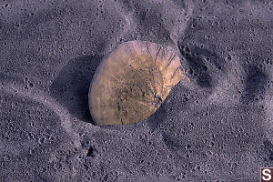 Sand Dollar Crashed into Sand