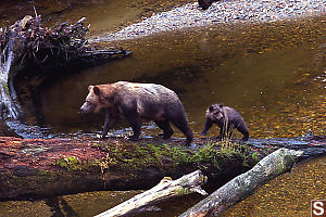 Mom And Baby Walking Up Log