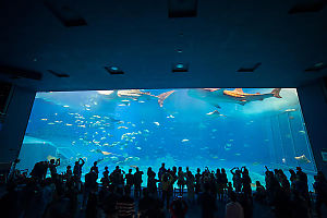Crowd Watching Whale Sharks Go By