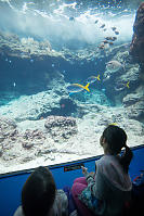 Kids Watching Reef Fish