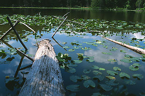Log In Roe Lake