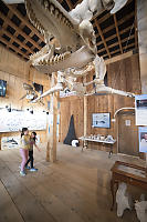 Kids Under Orca Skeleton