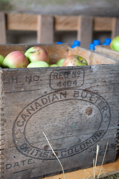 Canadian Butter Apples