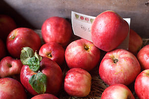 Red Apples In Box