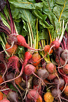 Various Beets