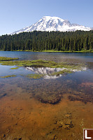 Rainier In Shallow Water