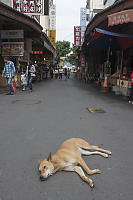 Lazy Dog In Tourist Town