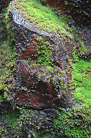 Moss On Rocks Behind Falls
